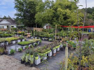 Cultivate | Garden + Harvest